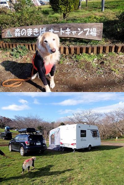 の ば 場 まき 森 オート キャンプ